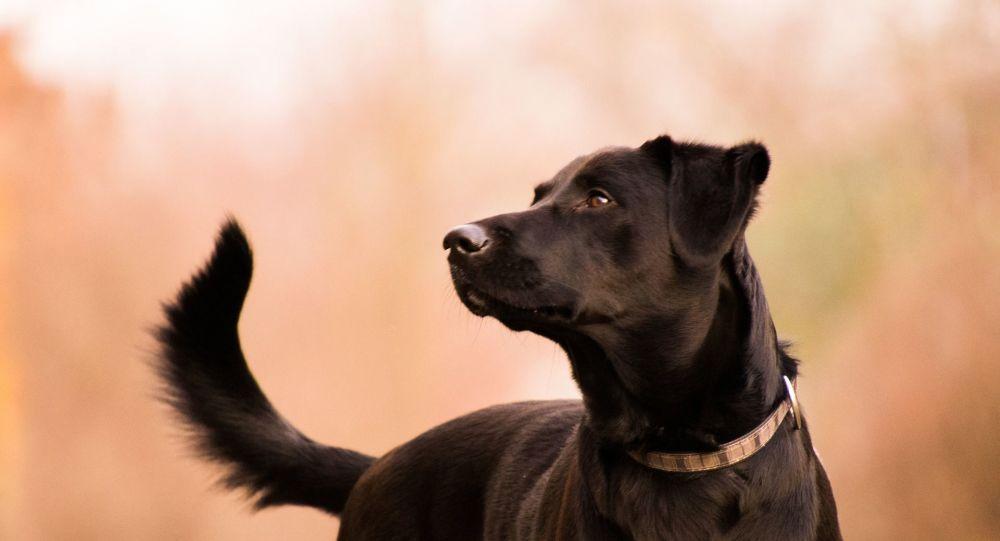 Ce chien réveille ses maîtres et leur sauve la vie