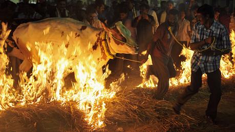 Linchan a un musulmán en la India por sacrificar una vaca