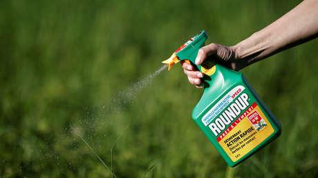 Una persona rocía una plantación con herbicida Roundup de Monsanto.