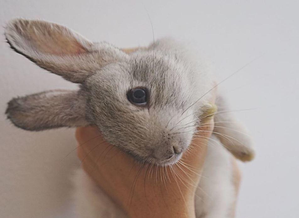 Uno de los conejos rescatados por la activista.