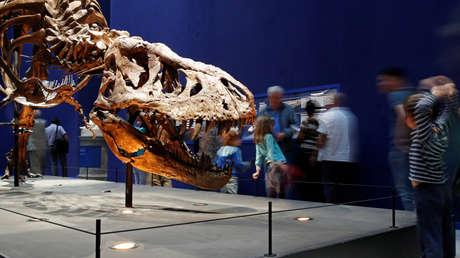 Un niño de cinco años identifica huellas de dinosaurios de hace 130 millones de años (FOTOS, VIDEO)