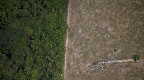 La deforestación en la Amazonía brasileña alcanza su nivel más alto en los últimos 12 años