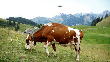 5c5f7bd7dda4c8133c8b45f6 'Brilliant!' Trump supports Democrats' Green Dream to 'eliminate all planes, cars, cows & military'