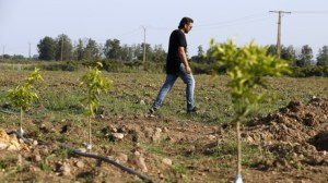 Corse : la France fait venir 902 ressortissants marocains pour «sauver les récoltes» de clémentines