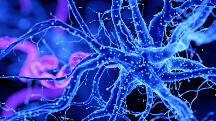 Scientists identify brain cells most vulnerable to Alzheimer's disease for the first time!