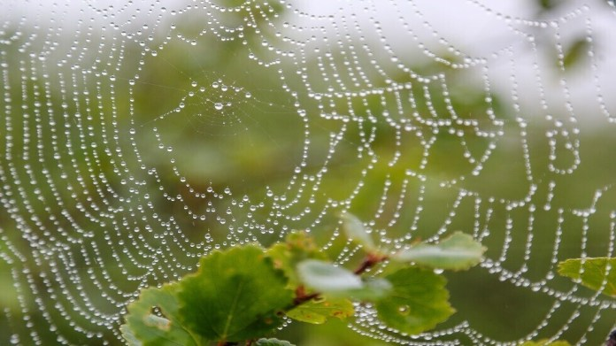 Scientists translate the structure of a spider's web into music