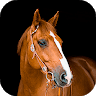 Horse Wallpaper HD : backgrounds & themes icon