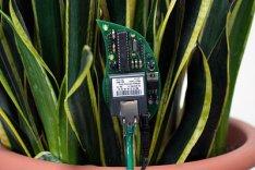 DIY Twitter Kit For Plants