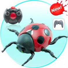 Wall Climbing Remote Controlled Lady Bug