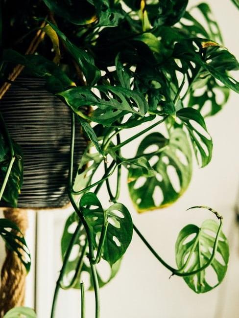 Scopri le piante rampicanti da interno più popolari. Vasi Da Appendere Idee Per Interni Ed Esterni Westwing