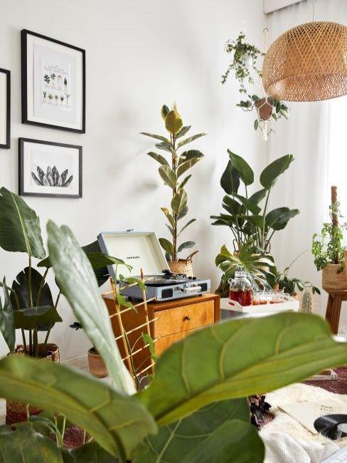 Piante da cucina che combattono l'inquinamento casalingo purificano l'aria da. Piante Da Appartamento Quali Sono Le Piu Adatte Westwing