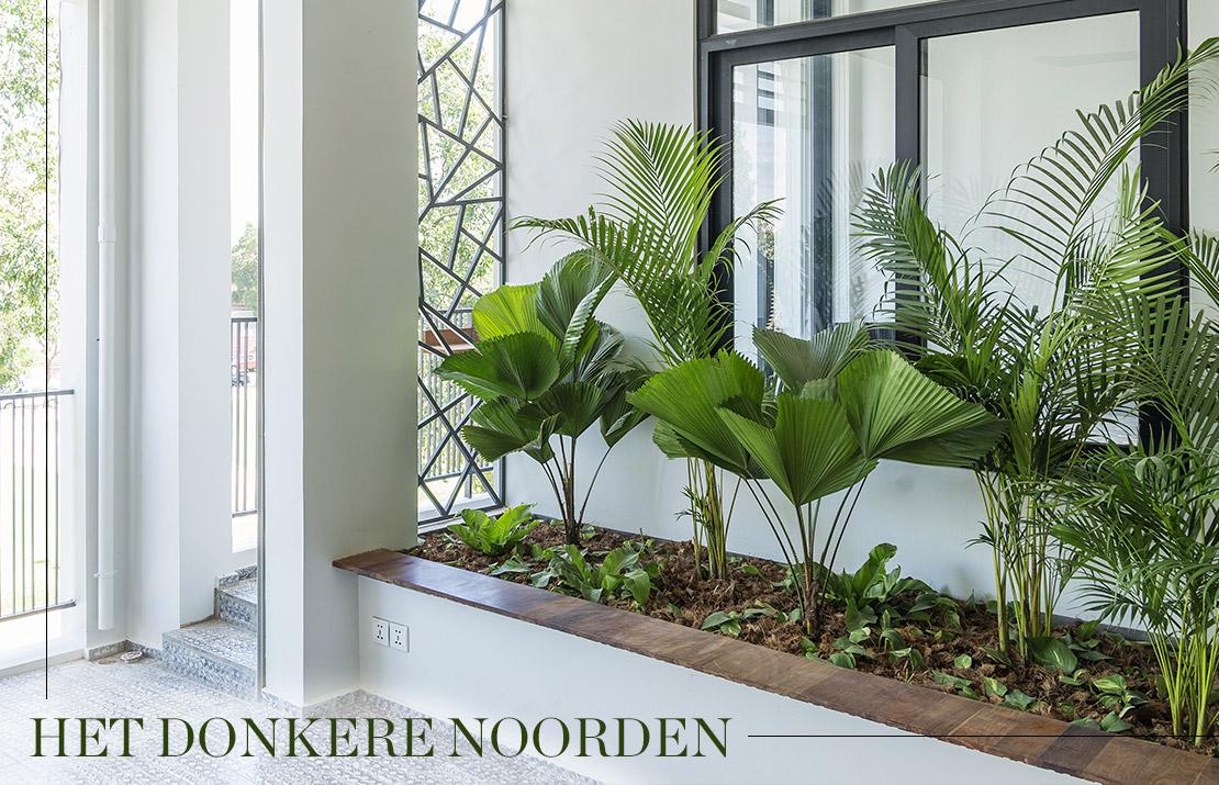 Deze planten zijn perfect voor jouw balkon  Westwing Magazine