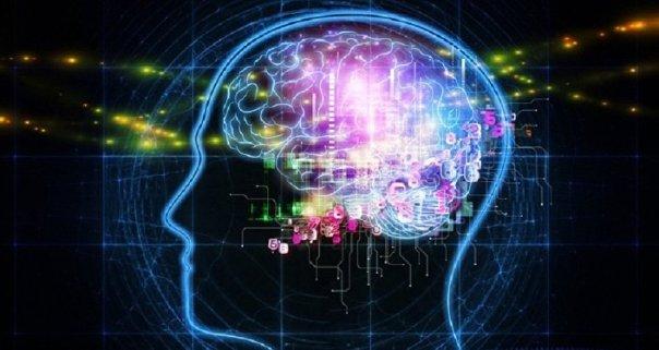 El cerebro humano (imagen referencial)