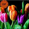 Imágenes Animadas Flores Y Rosas Gif Apk icon