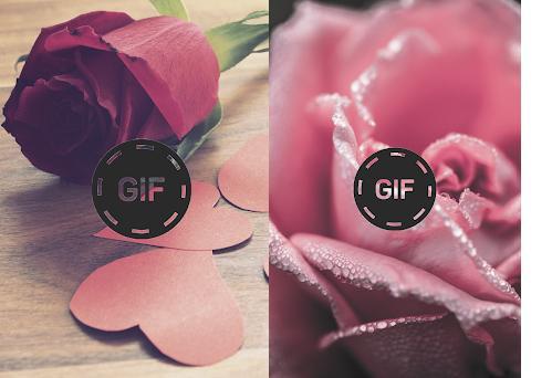 Imágenes Animadas Flores Y Rosas Gif Capturas de pantalla