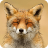 download Animal Sounds! apk