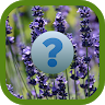 Herbs and spices quiz game apk icon