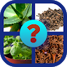 Guess name - Herbs and Spices game apk icon