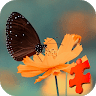 Beautiful Butterfly Jigsaw Puzzle Game game apk icon