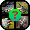 Guess The Different Animals game apk icon