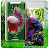 telecharger Wallpaper Beautiful Betta Fish (Ikan Cupang) apk