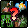 Guess The Animal : Quiz Game game apk icon
