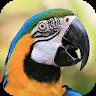 نگهداری از طوطی app apk icon