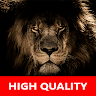 download Real Lion Sounds - High Quality Lion Roar Sounds apk