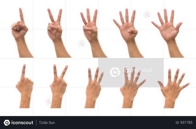 premium sum 5 picture of man hand in front and back side with show number collection against white background photo download in png & jpg format