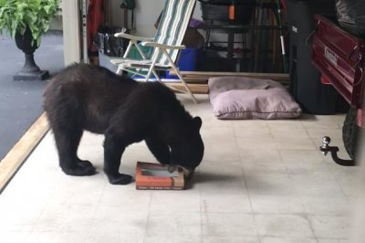 Watch Doughnuts left in garage attract black bear  UPIcom