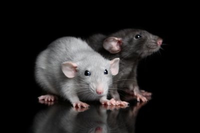 Man in China dies from hantavirus, over 1,000 cases reported - UPI.com