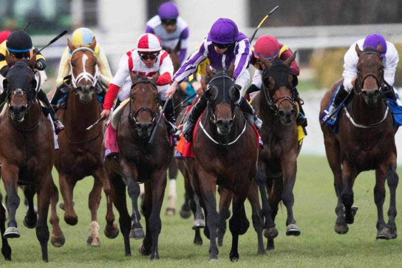 Upi Horse Racing Preview Cigar Mile Matriarch Derby