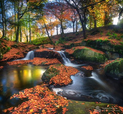 Autumn leaves carper the forest of Cloughleagh, Co Wicklow.  by theoherbots