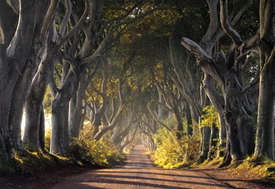 The Dark Hedges in Northern Ireland, more recently famous as Kings road in the Game of Thrones Television series. I had been waiting here since 5am,  by theoherbots