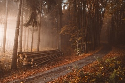 Lonely logs in the orange autumn foggy woods during the sunrise  © 2017 Tomas Hudolin, Feel free to follow me also on Instagram, search for tomashudo by theoherbots
