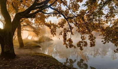 About autumn , the light and fog . © Александр Плеханов http:--plexanov.35photo.ru- by theoherbots
