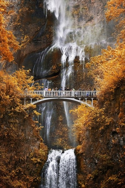 In Oregon, Multnomah Falls blow in the wind in the autumn time as tourist view from the bridge. by theoherbots