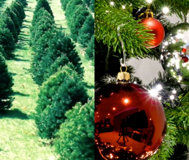 Real Or Fake Christmas Tree The Pros And Cons Of Cutting It Down Or Buying Artificial Abcnews Com