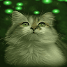 download Cat Eyes Blinking LWP apk