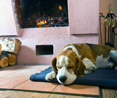 fireplace with dog laying in front