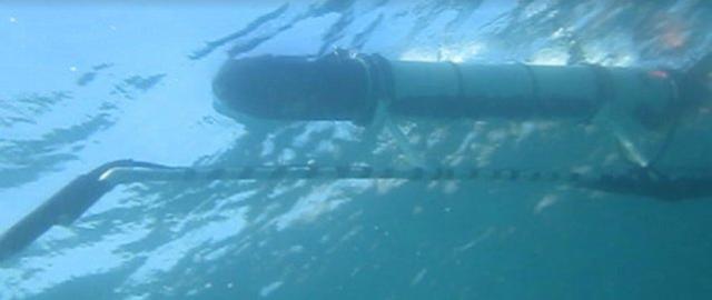shark-tracking-bot