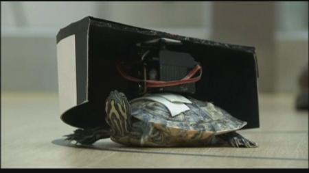 rc-turtle