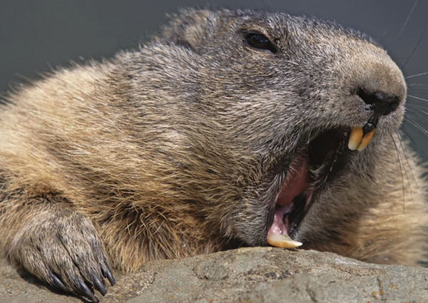 beaver-internet-outage