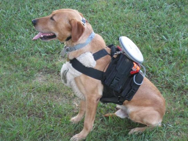remote-control-dog-walker