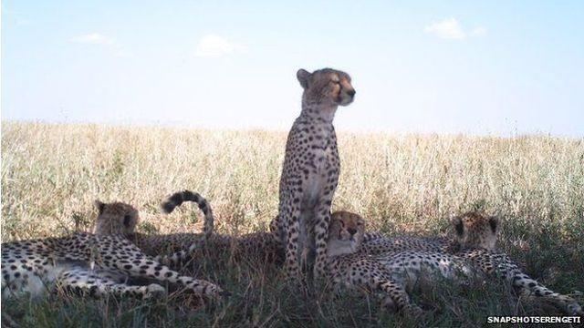 serengeti-cam