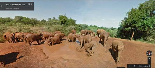 street-view-elephants