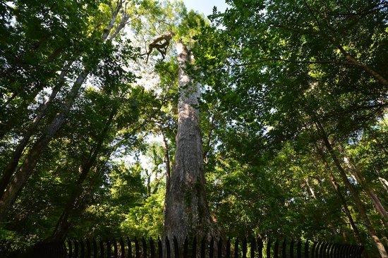 lady-liberty-tree