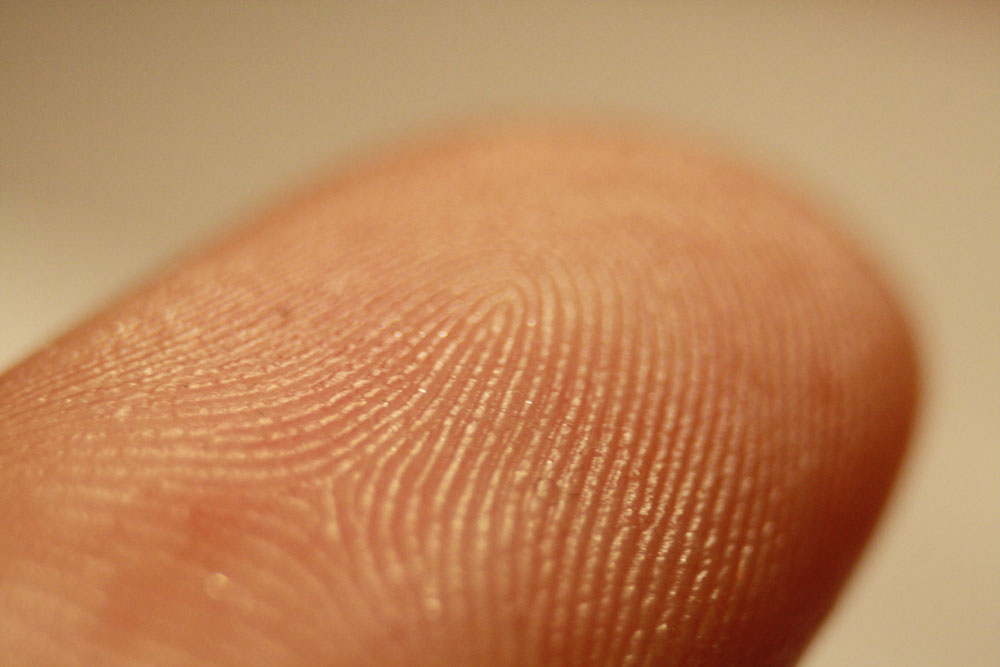fingerprint_detail_on_male_wikipedia
