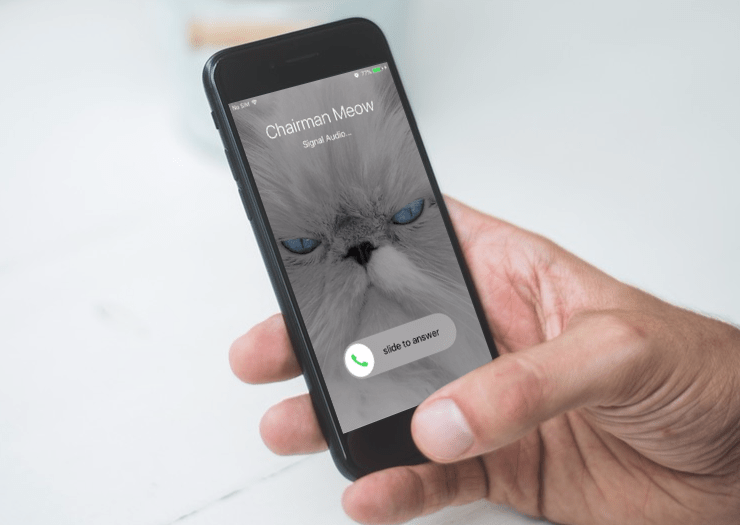 Signal Messaging App Sees Boost In Signups Following Changes To WhatsApp's Policy