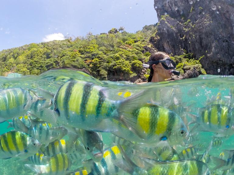 Mergulhando com peixes coloridos na Tailândia